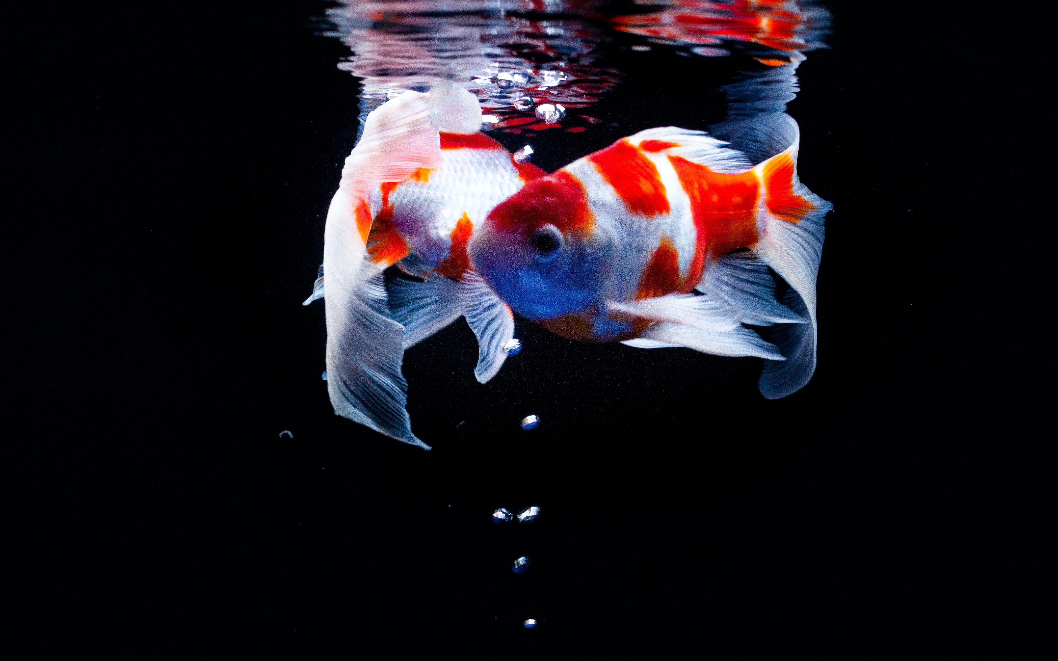 Two fish swimming. Grenfell and systemic Change.